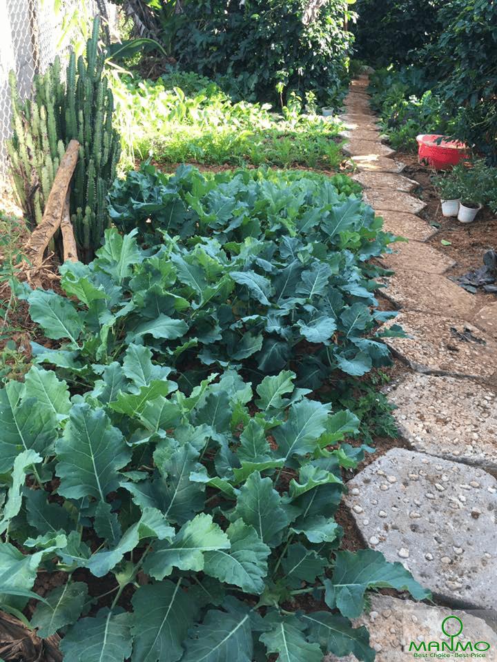Khu vườn Tháng 9 - Dalat September Garden Homestay